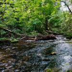 Eau et Biodiversité